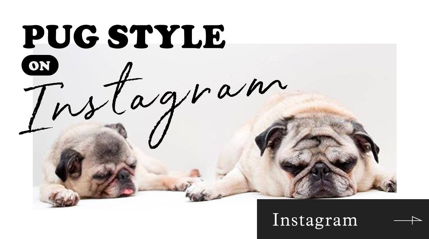pug-instagram